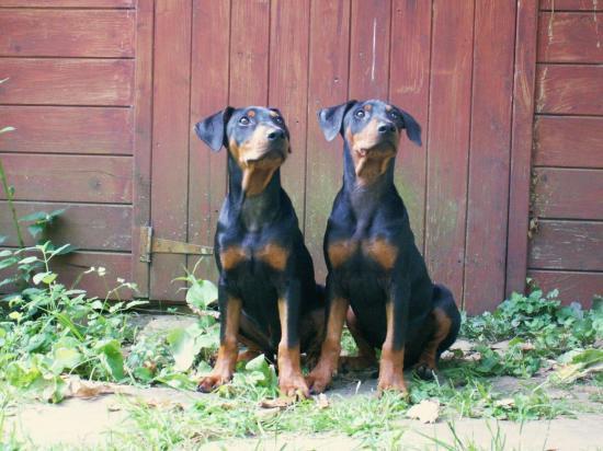 Igor et son frère Icare