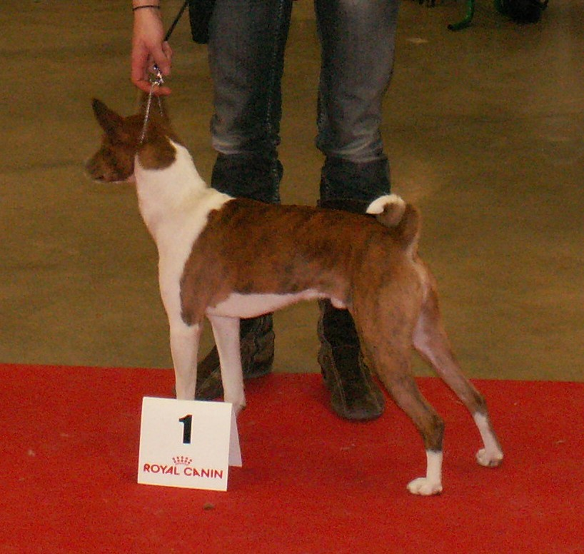 Paris Dog Show 2012