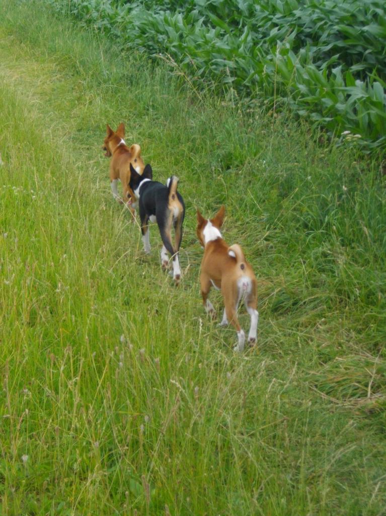 Sandy, Gary et Linéa